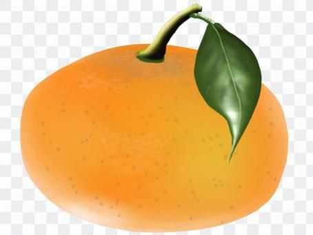 橘子用葉子