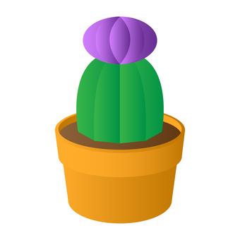 仙人掌(紫色)