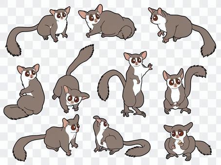 10 種塞內加爾叢林寶寶