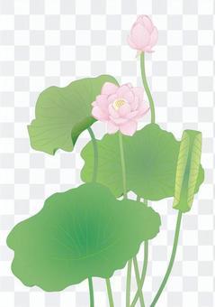 Lotus flower _ fine detail