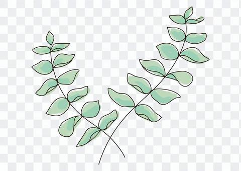 桉樹枝線描色料葉