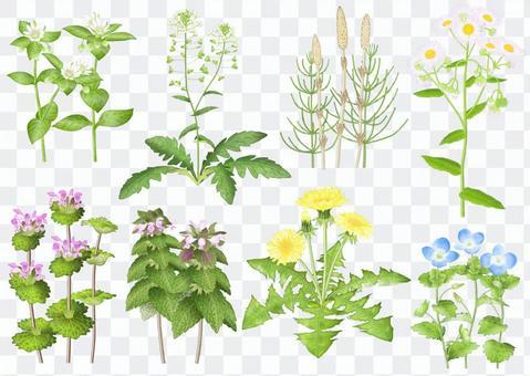 植物名單/ 1 /春季野花