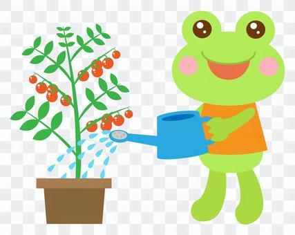 水やり ミニトマト かえる 蛙
