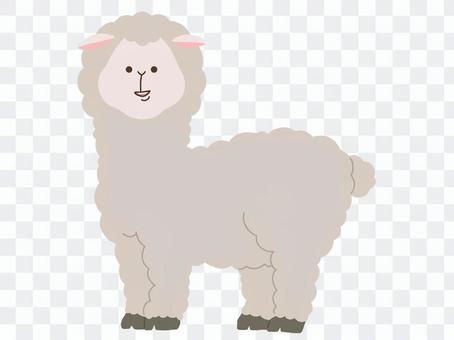 羊駝的插圖