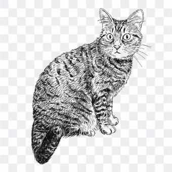キジトラ・しま猫の絵/白黒手描きイラスト