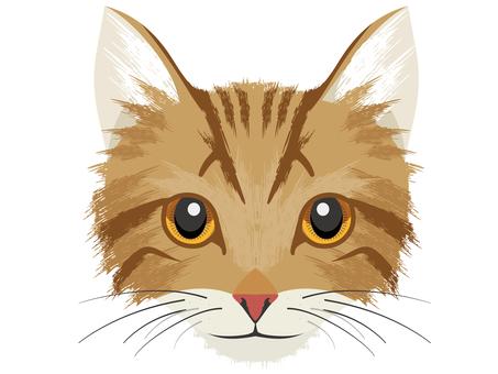Cat A Kijitora