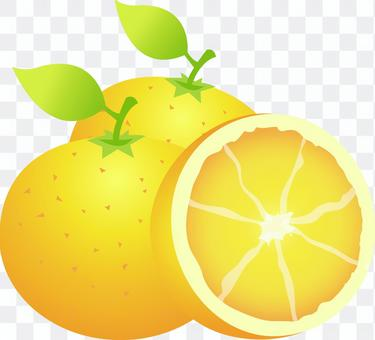 Mandarin orange navel