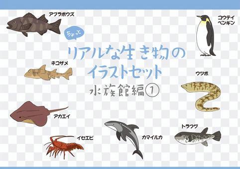 リアル動物イラスト 水族館編1