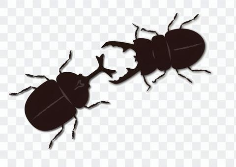 Beetle vs Stag beetle
