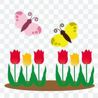 蝴蝶聚集在鬱金香