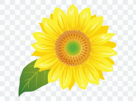 夏花·向日葵(向日葵)圖標B 01