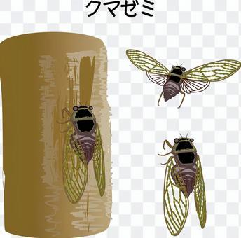 蟬熊澤米夏天啼鳴昆蟲