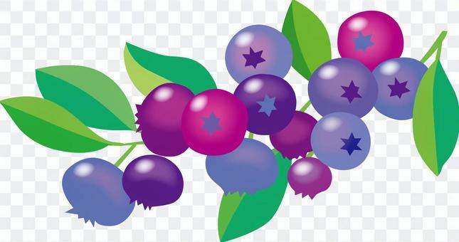 藍莓_cs