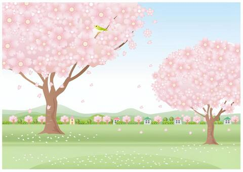 櫻花盛開時