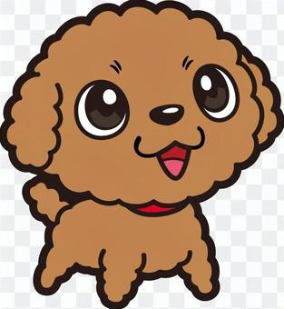 Dog _ Toy Poodle