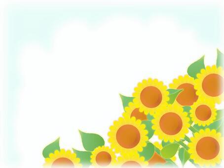 節日向日葵領域