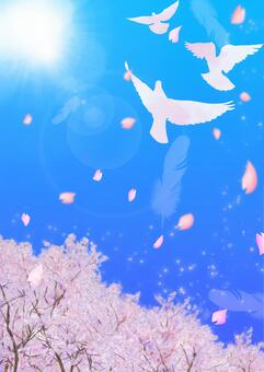 비둘기가 날고 푸른 하늘 벚꽃 a3