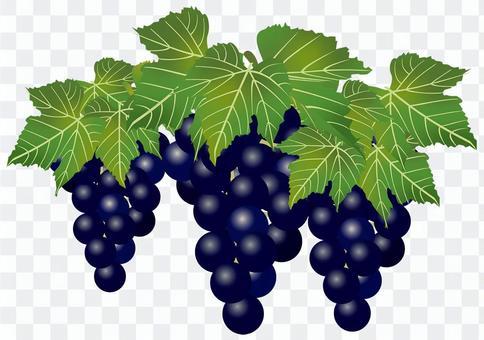 美味的葡萄5