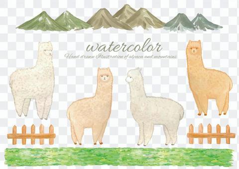 水彩羊駝2