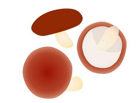 Illustration of 3 shiitake mushrooms