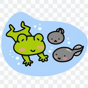 Parent and child of tadpoles and frogs