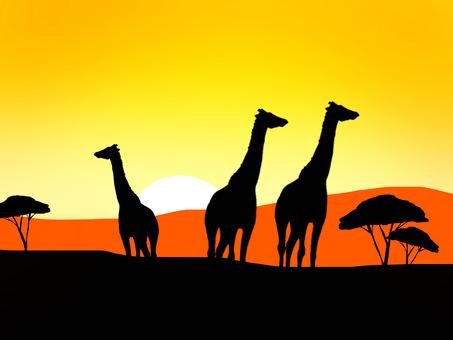 長頸鹿和非洲日落
