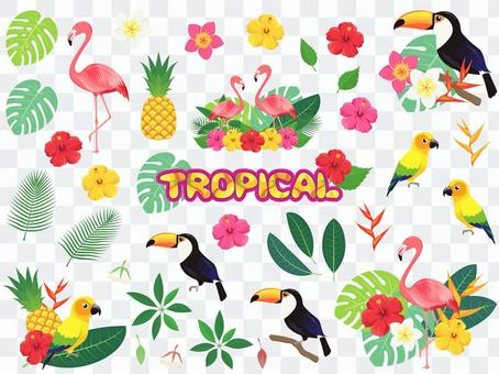 Tropical bird and flower set