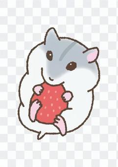 吃草莓的倉鼠