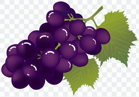 Grape (Giant Peony · Pione)