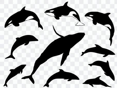 Cetacean silhouette_set