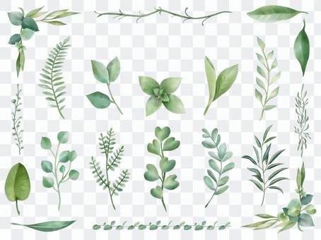 各種葉子植物收藏