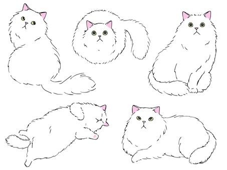 長毛貓(白貓)