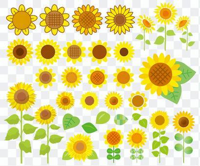 Sunflower set 01