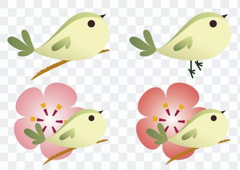 鳥和梅花的插圖