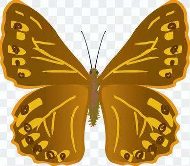 ヤマキマダラヒカゲ タテハチョウ科 昆虫