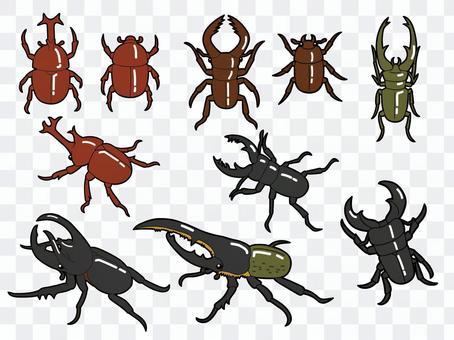 甲蟲和雄鹿甲蟲集