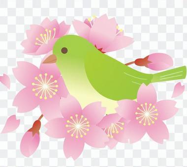 櫻花和mezzo