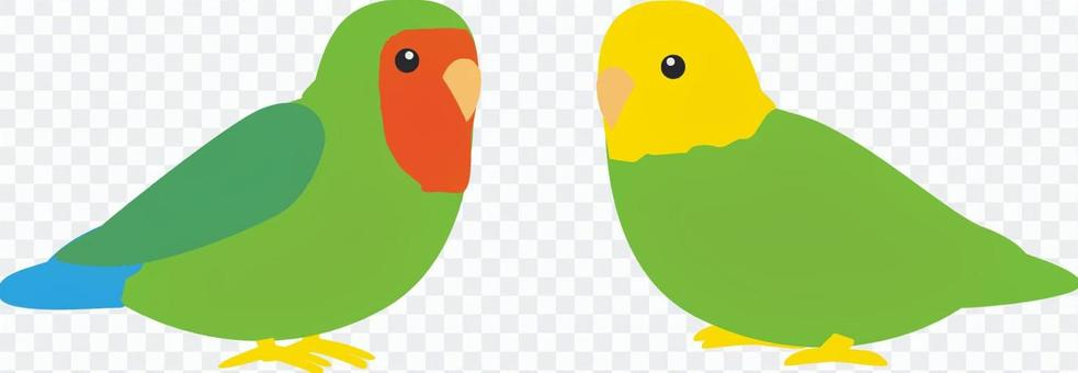 Two parroters staring at each other