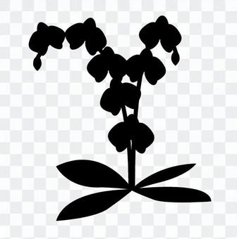 Phalaenopsis orchid silhouette