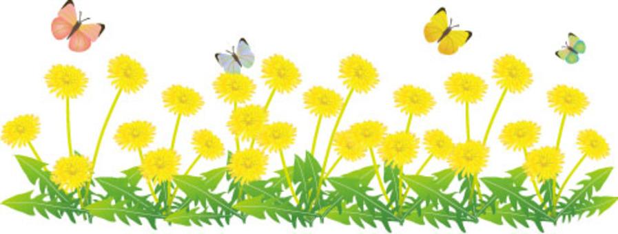 蒲公英花園和蝴蝶