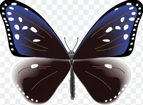 ツマムラサキマダラ 蝶 蝶々