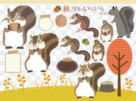 品種套秋季和松鼠
