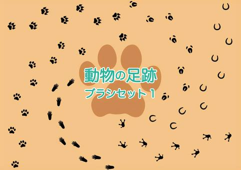 Animal's footprint brush material collection 1