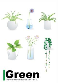 관엽 식물 세트
