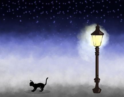 Cat and night street light