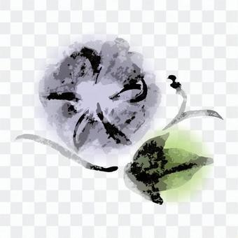 Ink painting, morning glory, colored