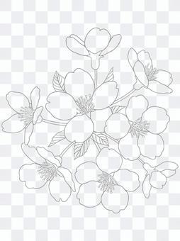 著色櫻花一枝(線條顏色:灰色)