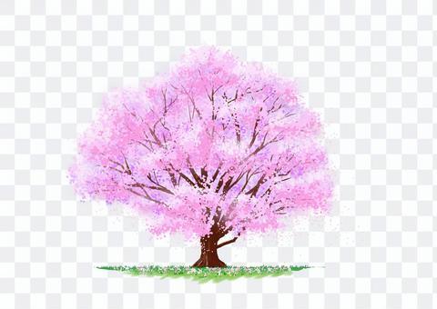 花瓣跳舞的自然插圖櫻花樹