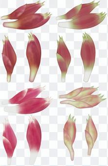 Myoga /蔬菜