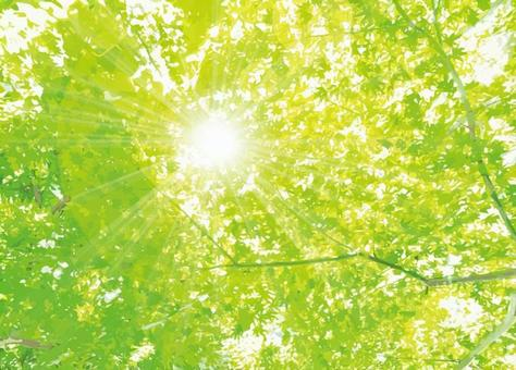 Green maple forest texture 0728